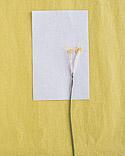 из гофрированной бумаги цветы