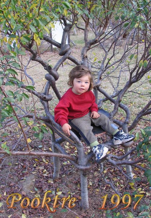 Выращиваем садовую мебель
