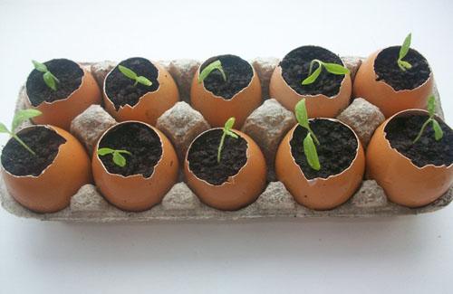 Применение яичных вазочек в садоводстве